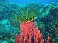 eponges-et-coraux