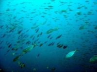 banc-de-poissons
