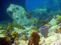 vue-sous-marine