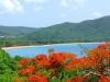 plage de Grande Anse à Deshaies